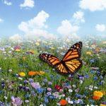 Laatste kans! Bestel nestkastjes en /of planten Biodiversiteit in Boijl